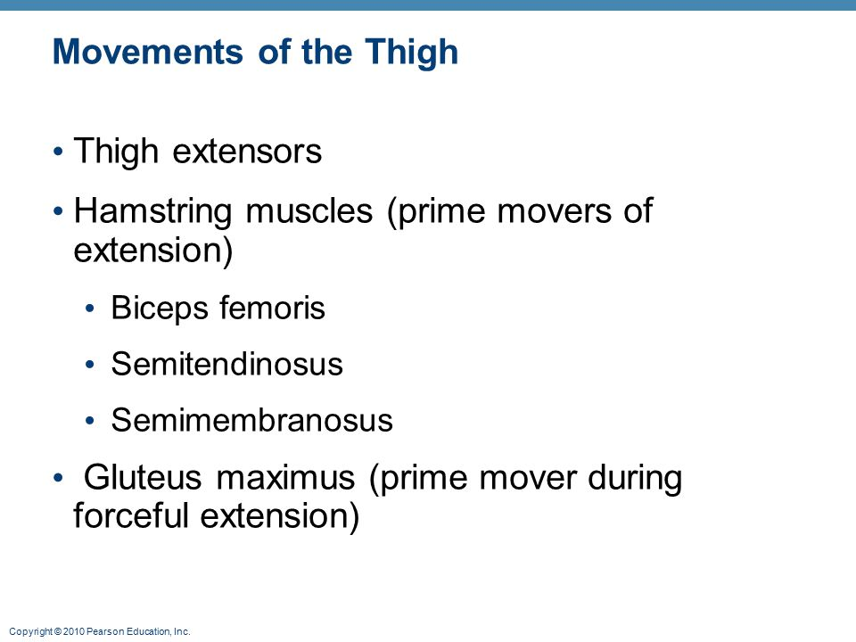 Hamstring muscles (prime movers of extension)