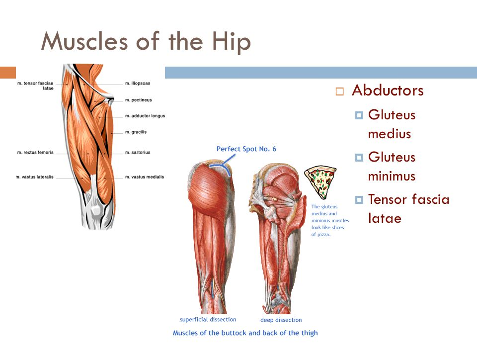Chapter 13 Hip Pelvis And Thigh Injuries Ppt Video Online Download