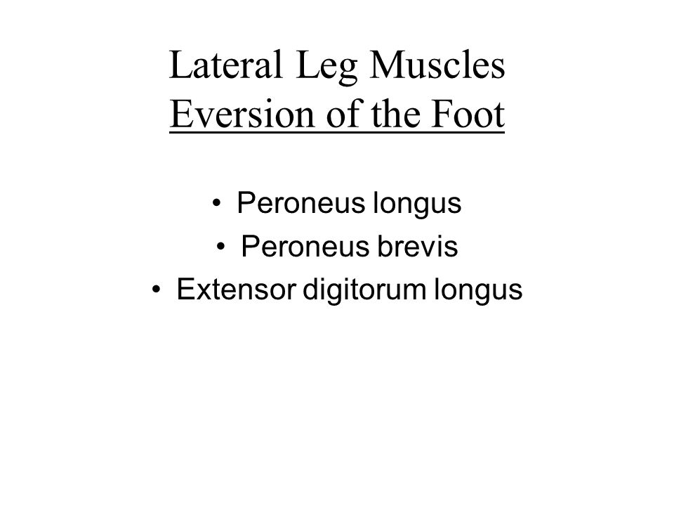 Lateral Leg Muscles Eversion of the Foot