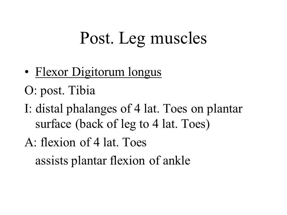 Post. Leg muscles Flexor Digitorum longus O: post. Tibia