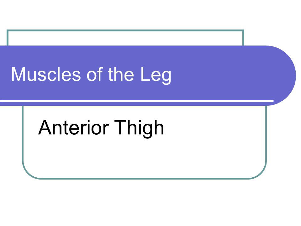 Muscles of the Leg Anterior Thigh