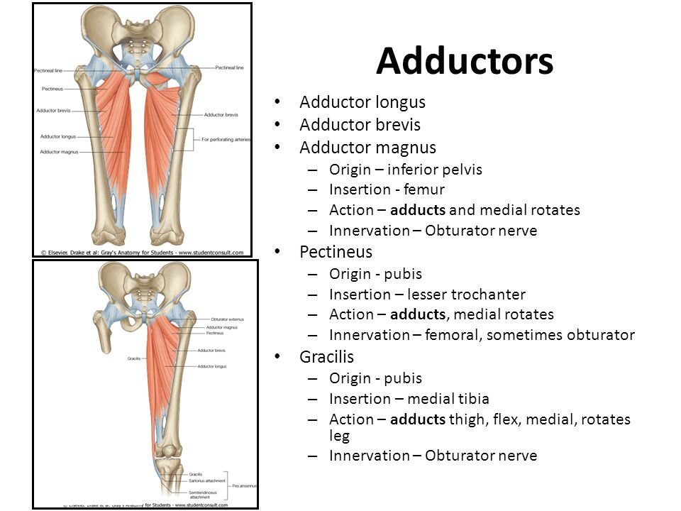 Classification and action of the lower extremity muscles - ppt video ...