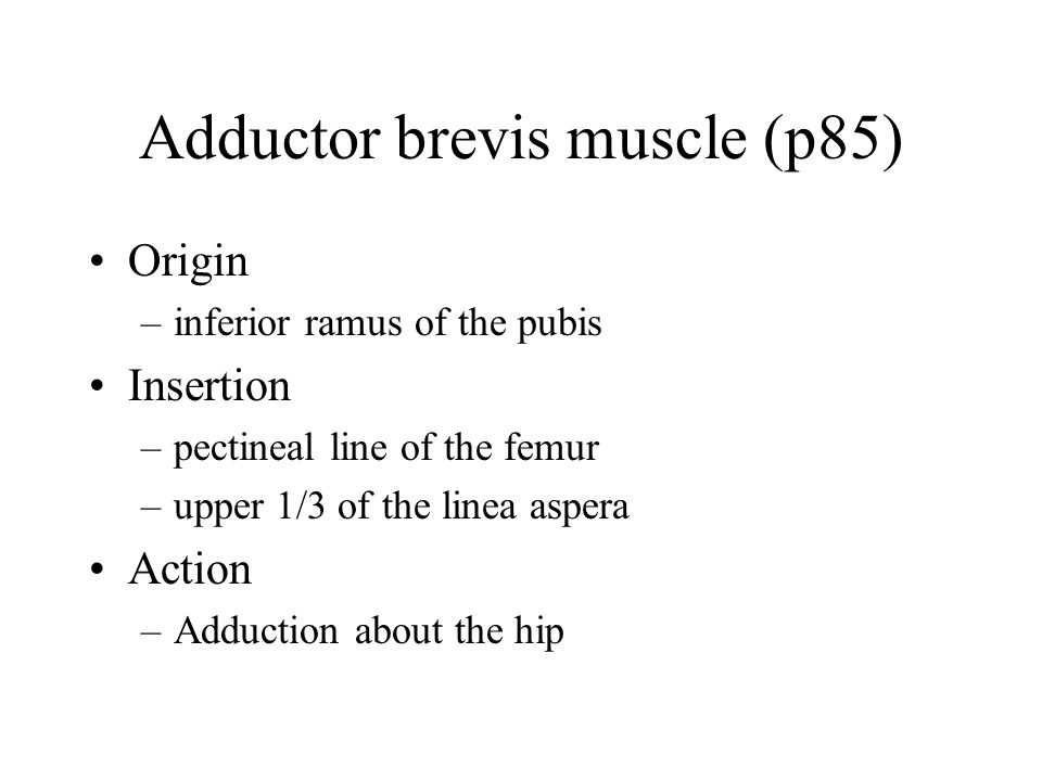 Adductor brevis muscle (p85)