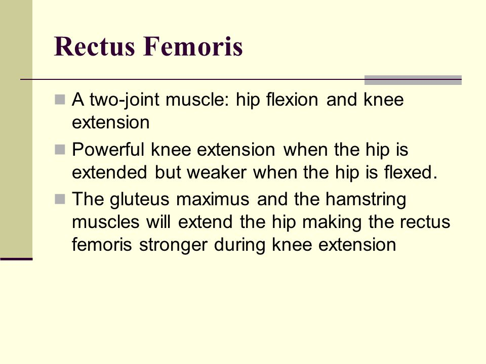 Rectus Femoris A two-joint muscle: hip flexion and knee extension