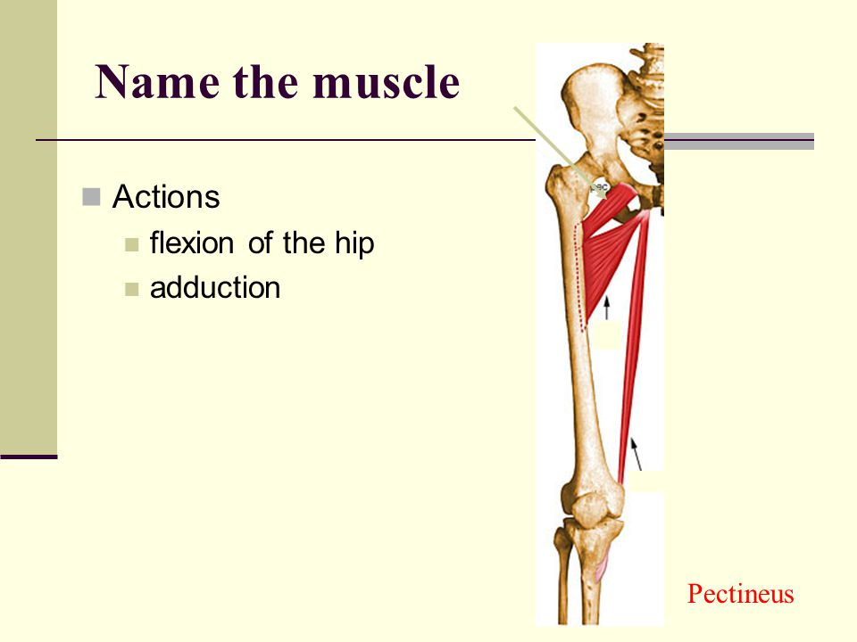 Name the muscle Actions flexion of the hip adduction Pectineus