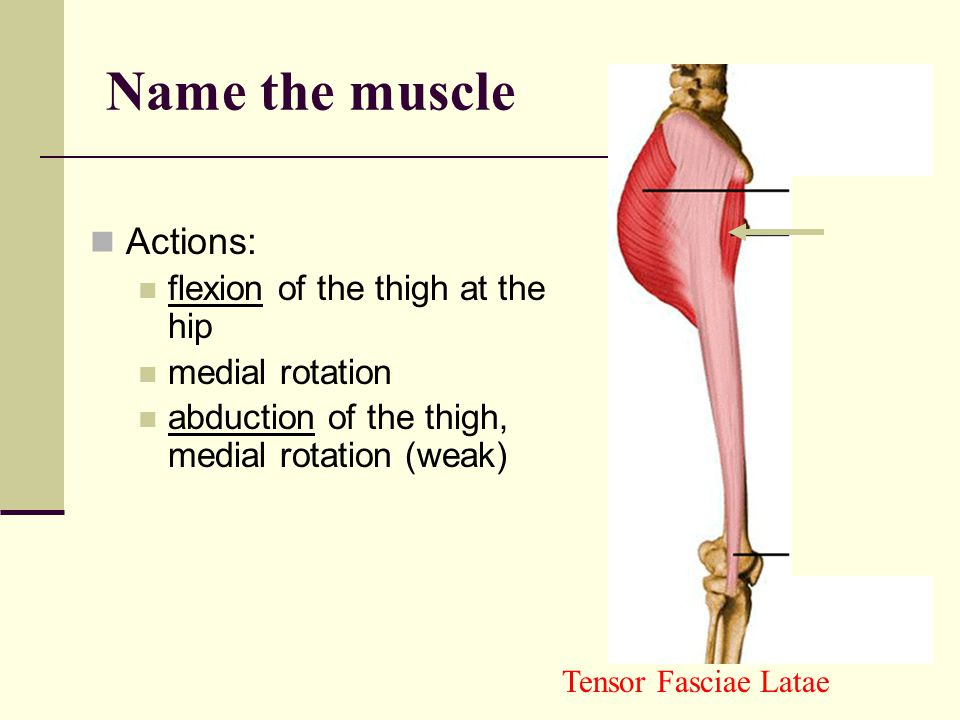 Name the muscle Actions: flexion of the thigh at the hip