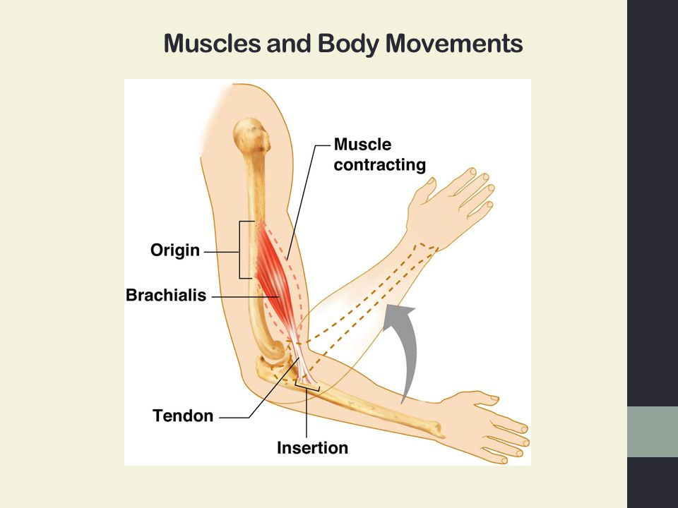 Joints And Body Movement Ppt Video Online Download