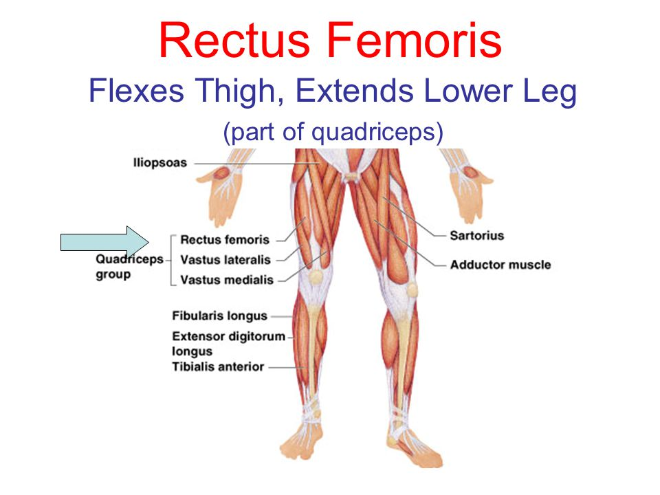 Muscles Of The Body You Need To Be Able To Know The Location And