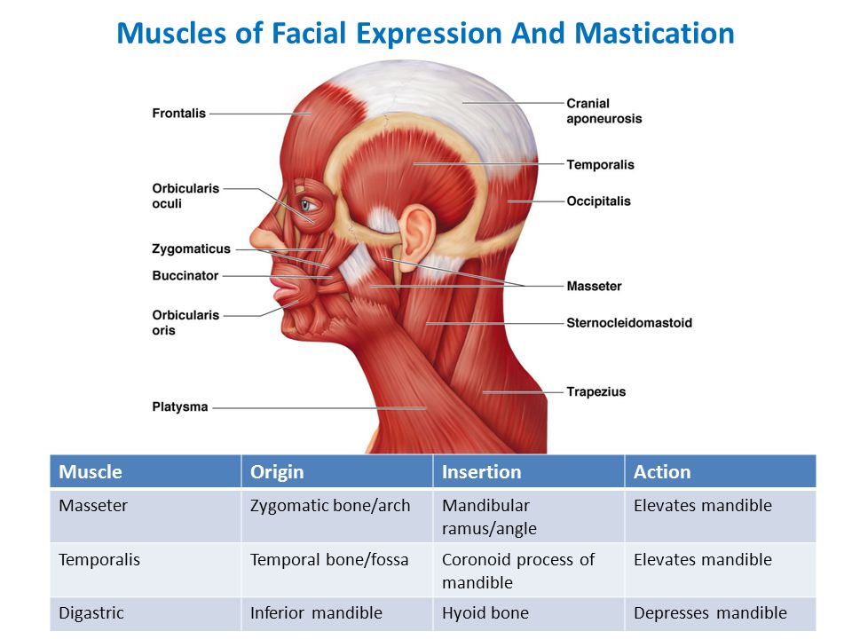 Muscles Of Facial Expression And Mastication Ppt Video Online Download