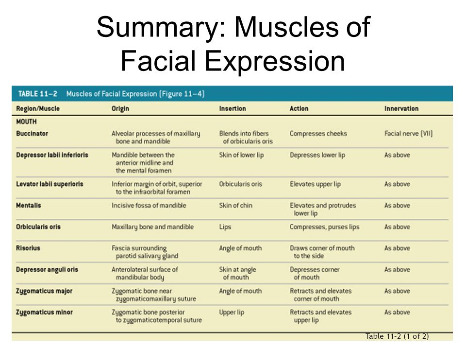 Apologise, action of facial muscles with