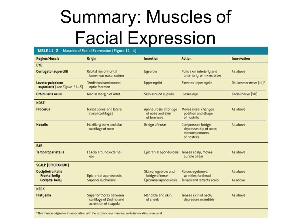 Summary: Muscles of Facial Expression