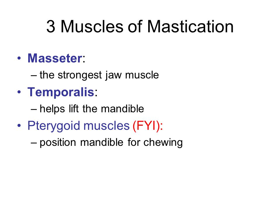 3 Muscles of Mastication