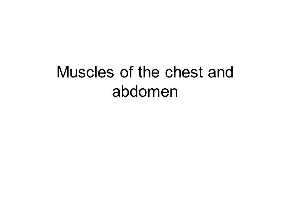 Muscles of the chest and abdomen