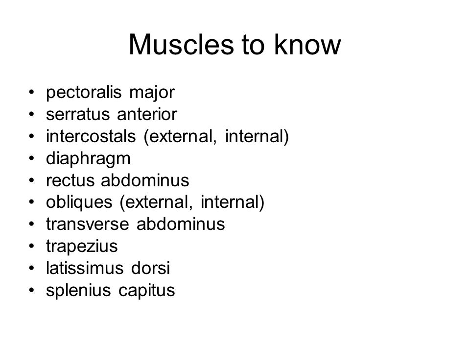 Muscles to know pectoralis major serratus anterior