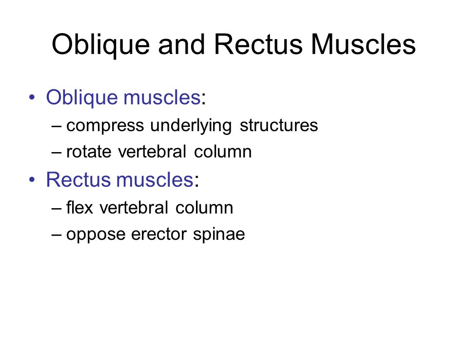 Oblique and Rectus Muscles