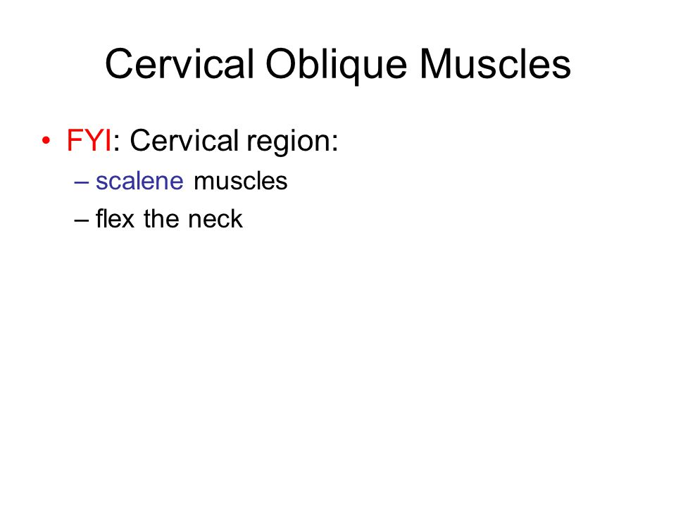 Cervical Oblique Muscles