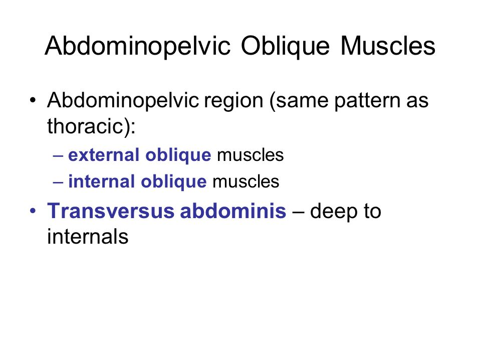 Abdominopelvic Oblique Muscles