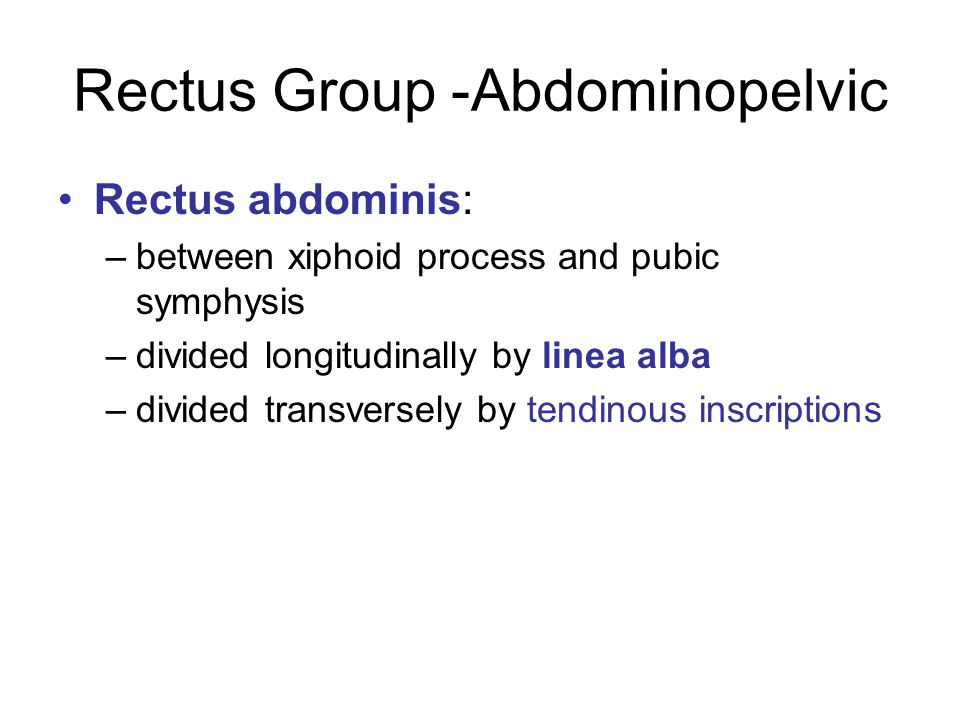 Rectus Group -Abdominopelvic