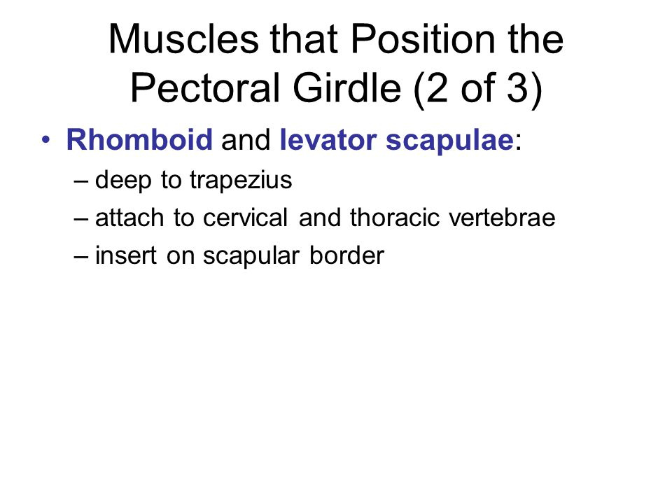 Muscles that Position the Pectoral Girdle (2 of 3)