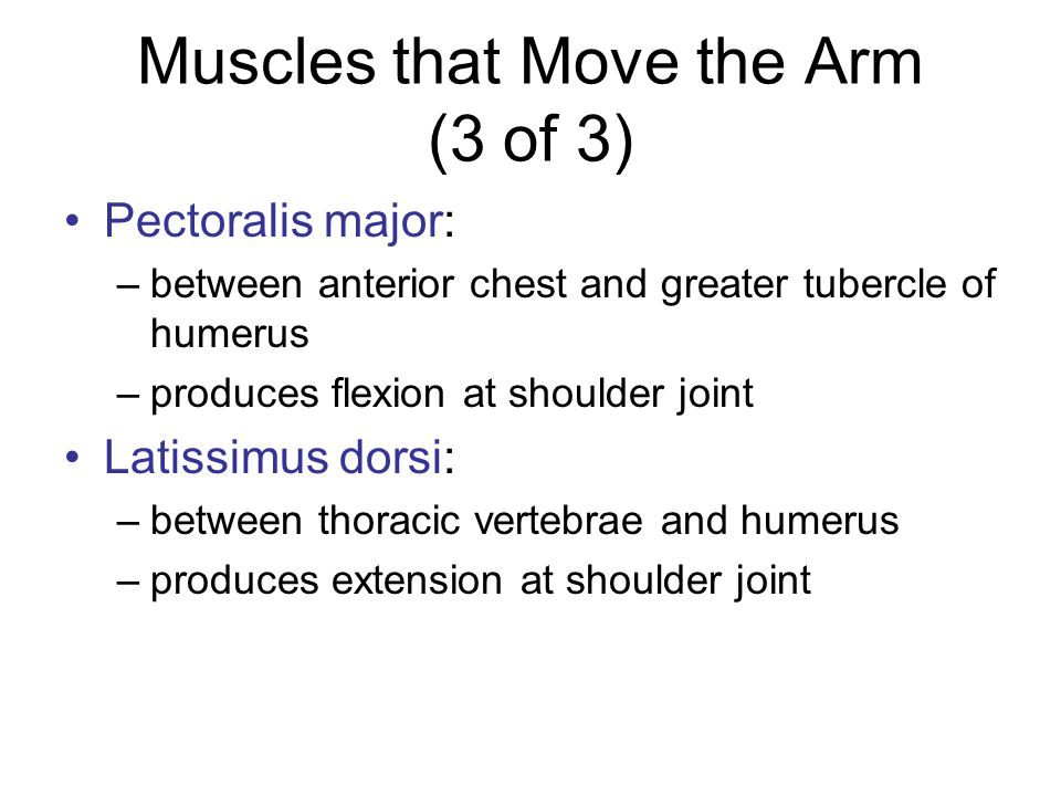 Muscles that Move the Arm (3 of 3)