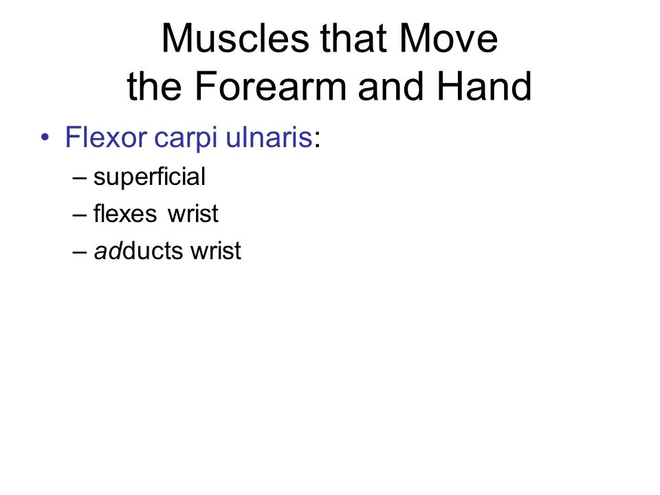 Muscles that Move the Forearm and Hand