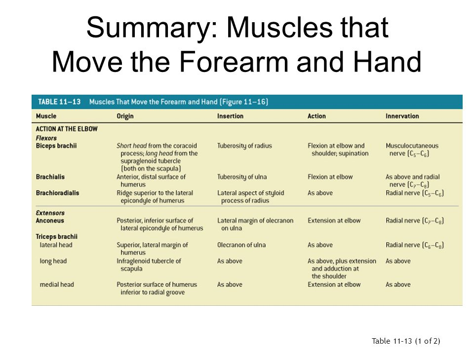 Summary: Muscles that Move the Forearm and Hand