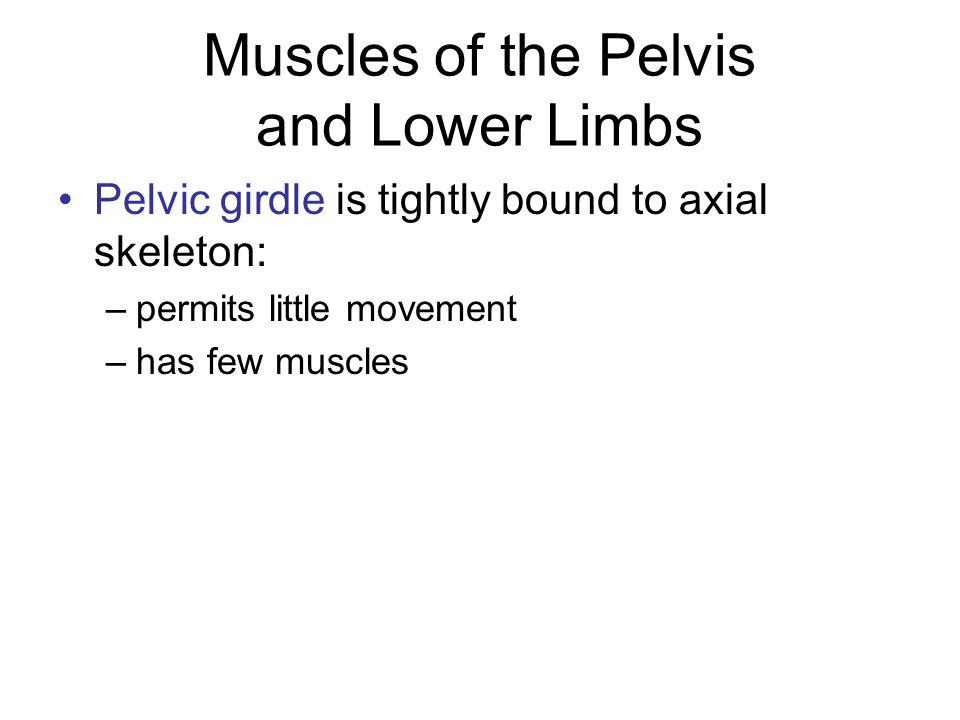 Muscles of the Pelvis and Lower Limbs
