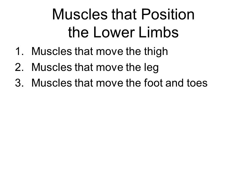 Muscles that Position the Lower Limbs