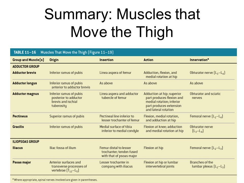 Summary: Muscles that Move the Thigh