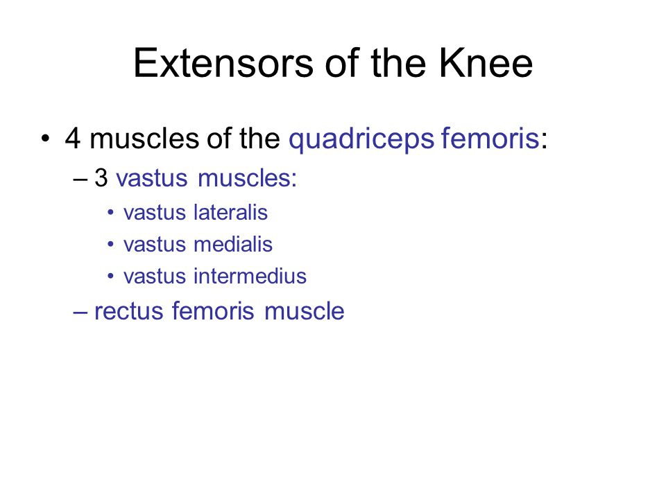 Extensors of the Knee 4 muscles of the quadriceps femoris:
