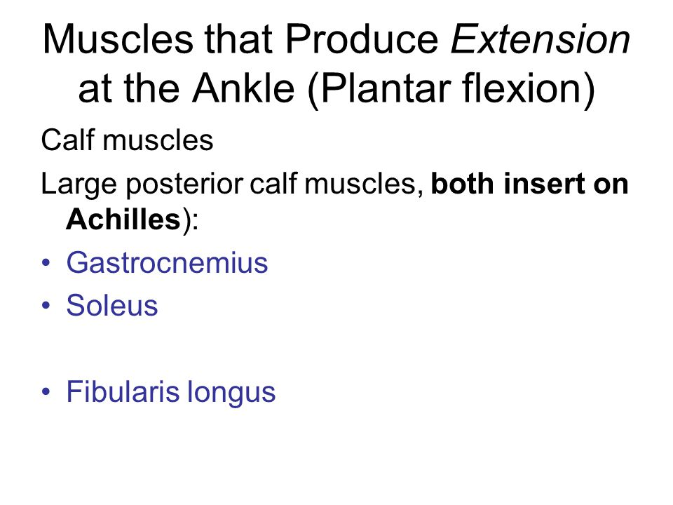 Muscles that Produce Extension at the Ankle (Plantar flexion)