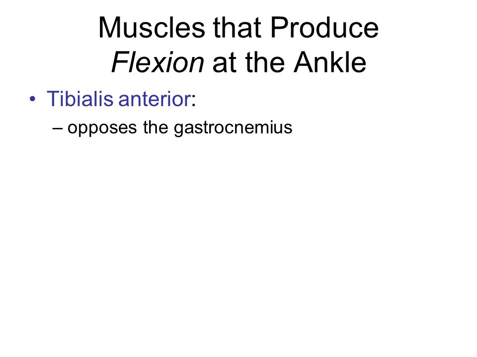 Muscles that Produce Flexion at the Ankle