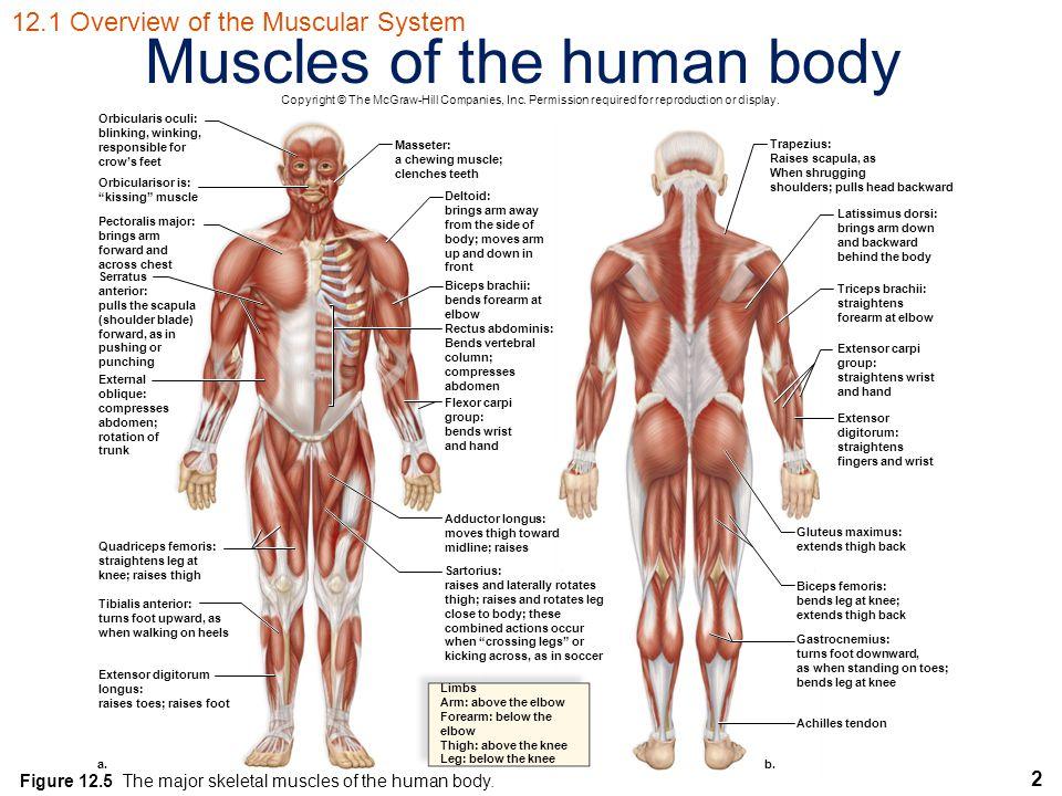 Human Biology Sylvia S. Mader Michael Windelspecht - ppt video ...