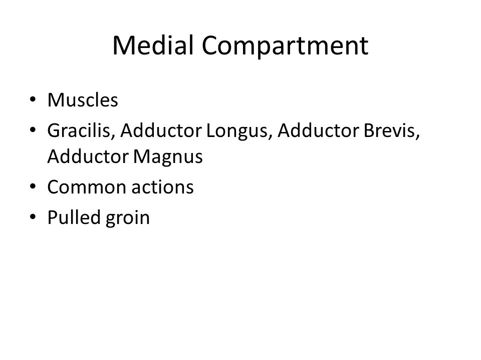 Medial Compartment Muscles