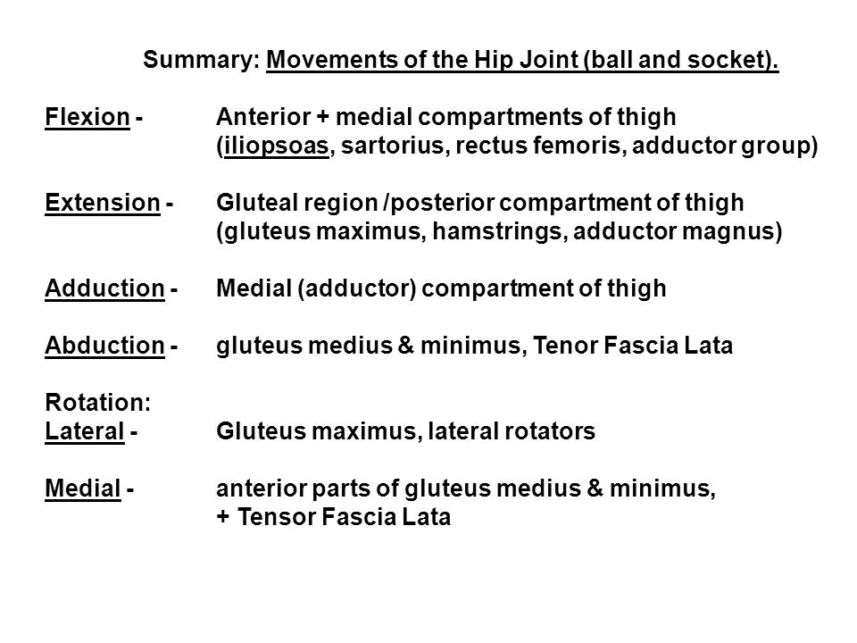 Summary: Movements of the Hip Joint (ball and socket).