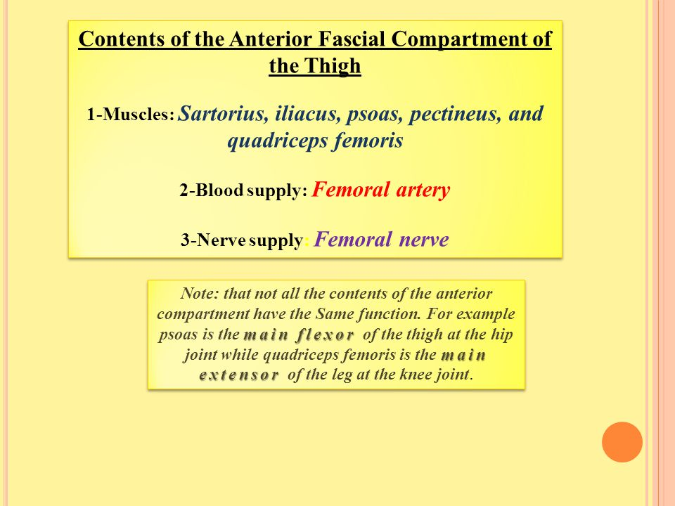 Contents of the Anterior Fascial Compartment of the Thigh