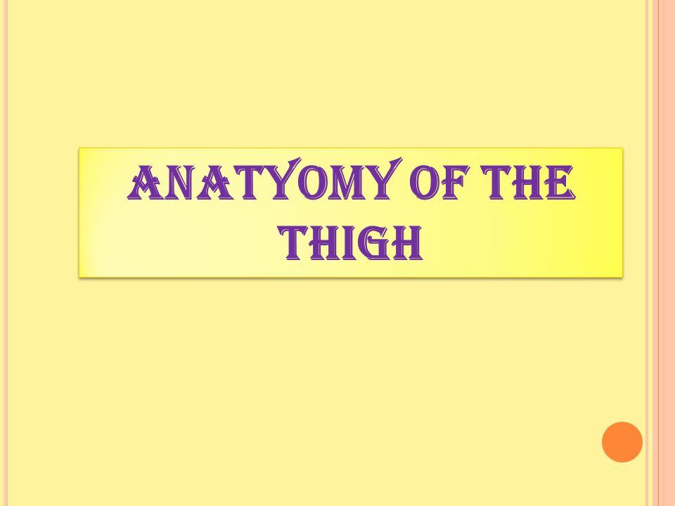 ANATYOMY OF The thigh
