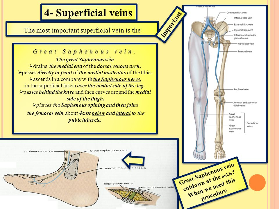 4- Superficial veins important