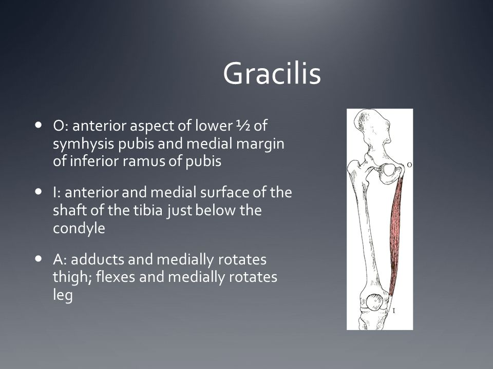 Gracilis O: anterior aspect of lower ½ of symhysis pubis and medial margin of inferior ramus of pubis.