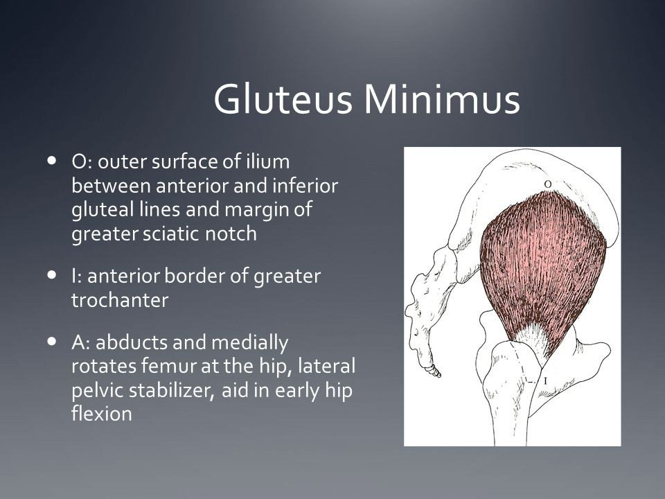 Gluteus Minimus O: outer surface of ilium between anterior and inferior gluteal lines and margin of greater sciatic notch.
