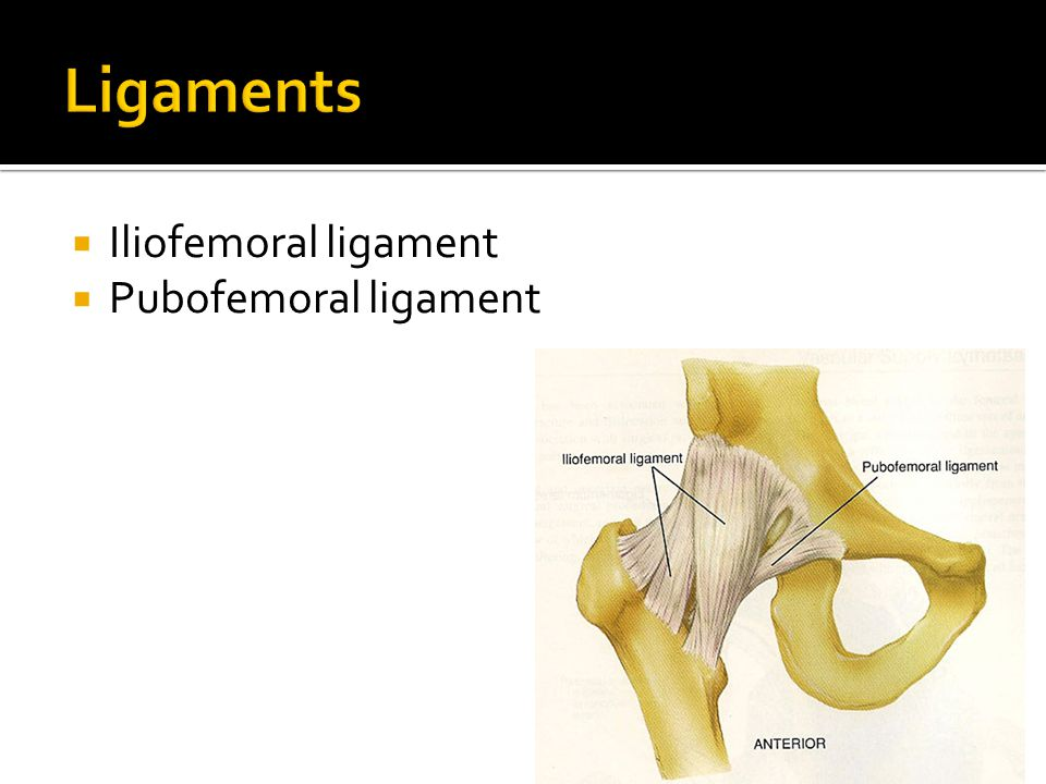 Hip (Iliofemoral) Joint - ppt video online download