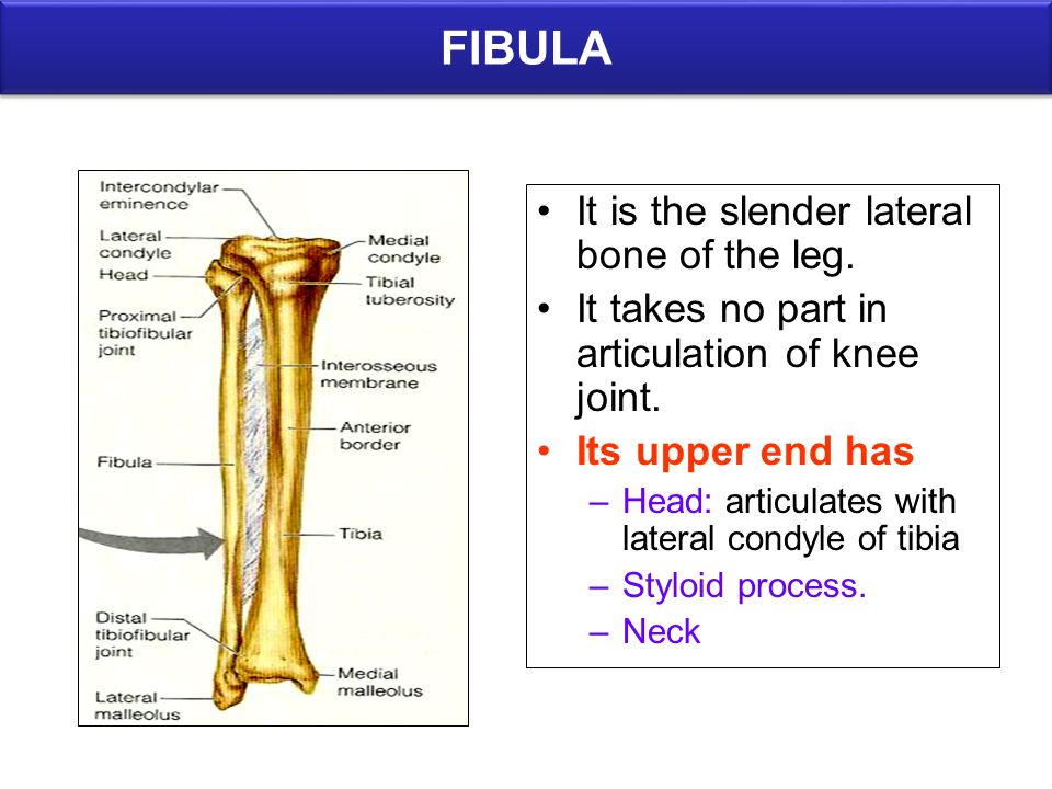 Bones Of Lower Limb Anatomy Department Dr Saeed Vohra Ppt Video