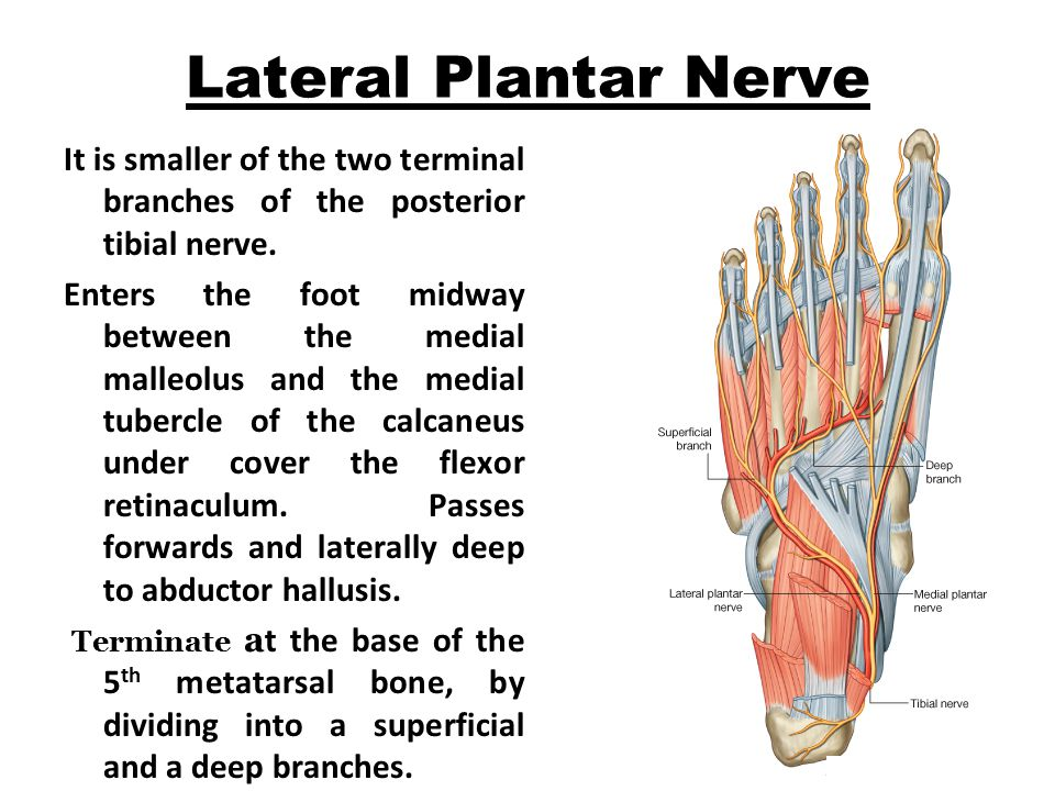 Sole Of The Foot Dr Rakesh Kumar Verma Assistant Professor Ppt