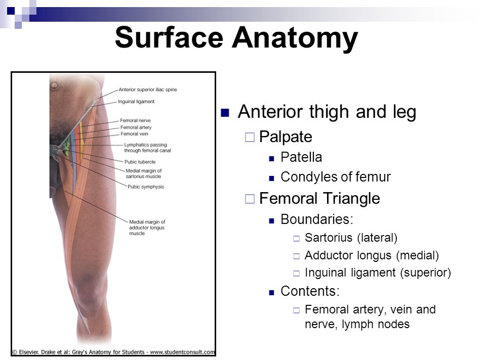 Pubic Tubercle Surface Anatomy Images - human body anatomy