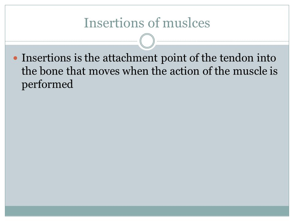 Insertions of muslces Insertions is the attachment point of the tendon into the bone that moves when the action of the muscle is performed.