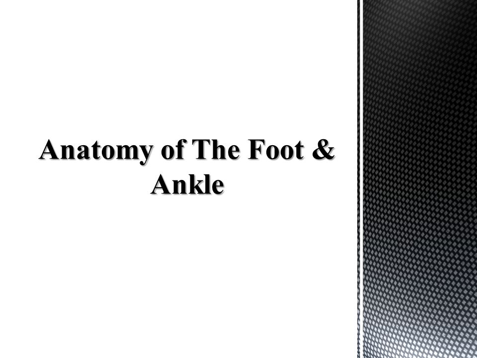 Anatomy of The Foot & Ankle