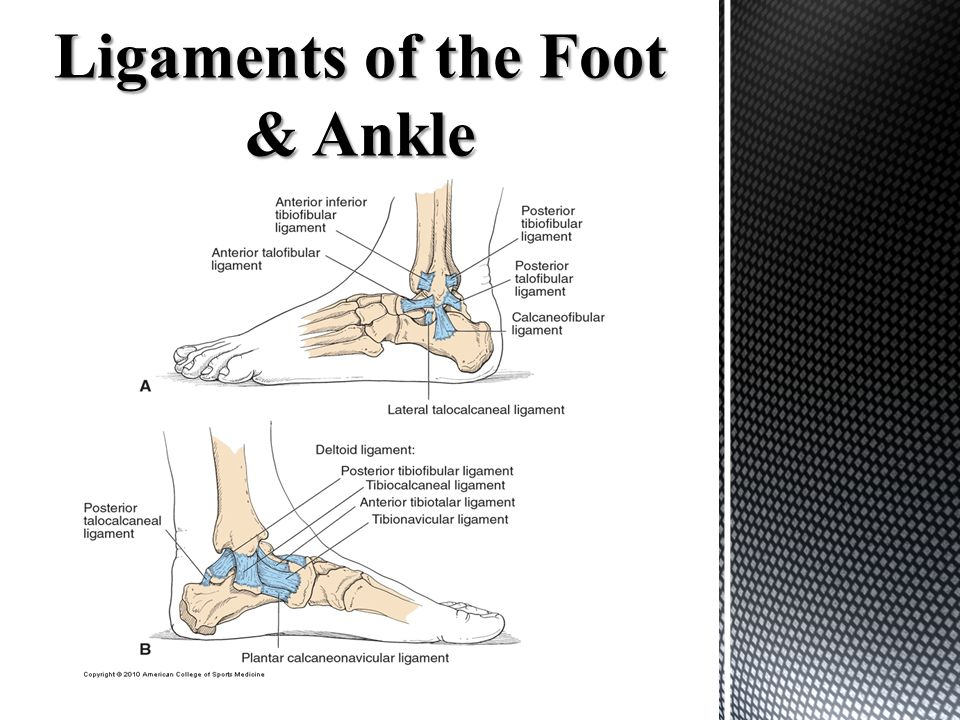 Ligaments of the Foot & Ankle