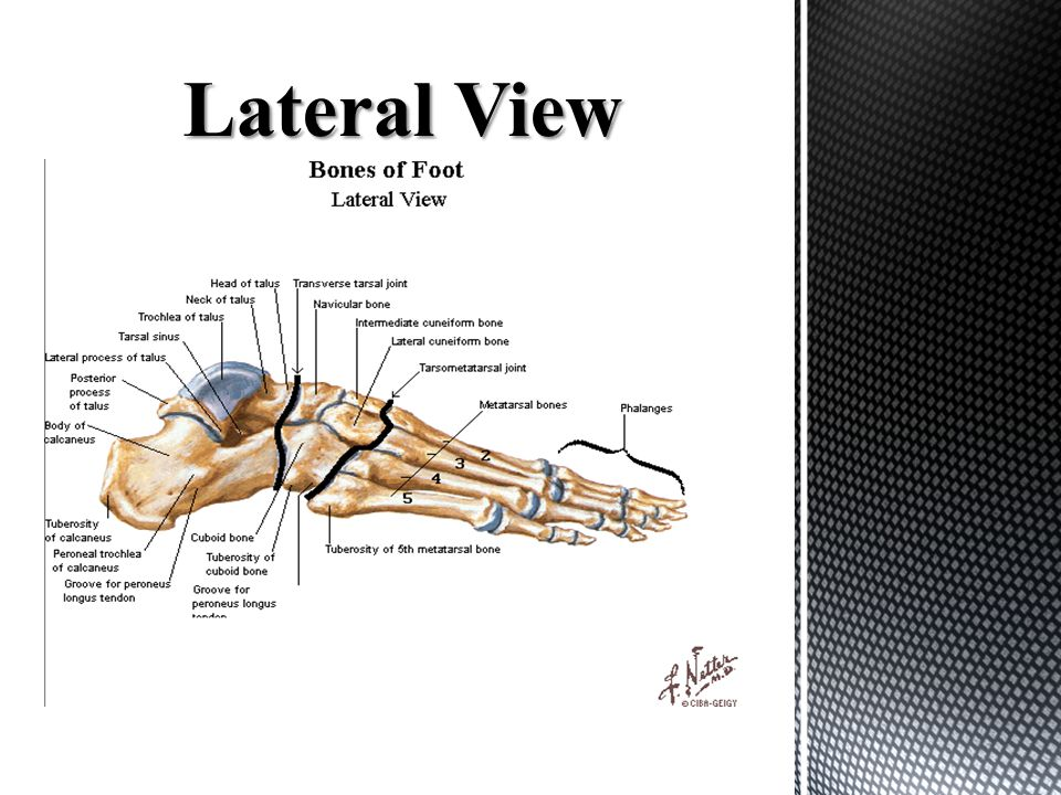Anatomy Of The Foot Ankle Ppt Download