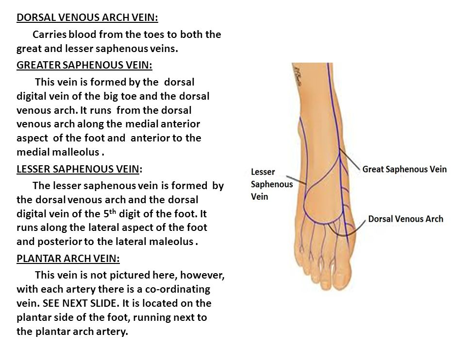Bones Of The Foot Ankle Ppt Download