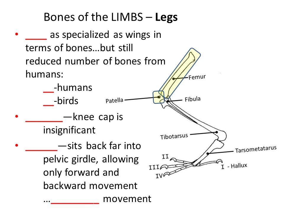 Anatomy & Physiology Part I ORNITHOLOGY ADVANCED ppt video online ...